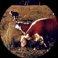 Livestock IPM Guidelines