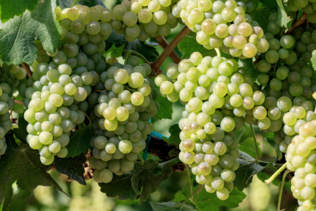 grapes ipm guidelines