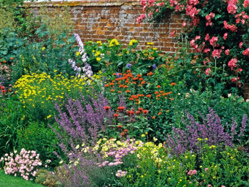 herbaceous perennials ipm guidelines